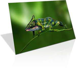 Chameleon as Limited Edition