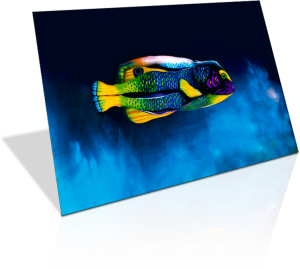 Angelfish as Limited Edition